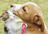 câncer de mama - cães e gatos